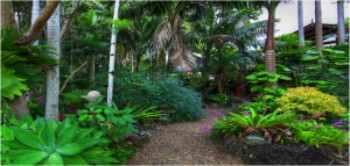The Rainforest at Maleny Tropical Retreat